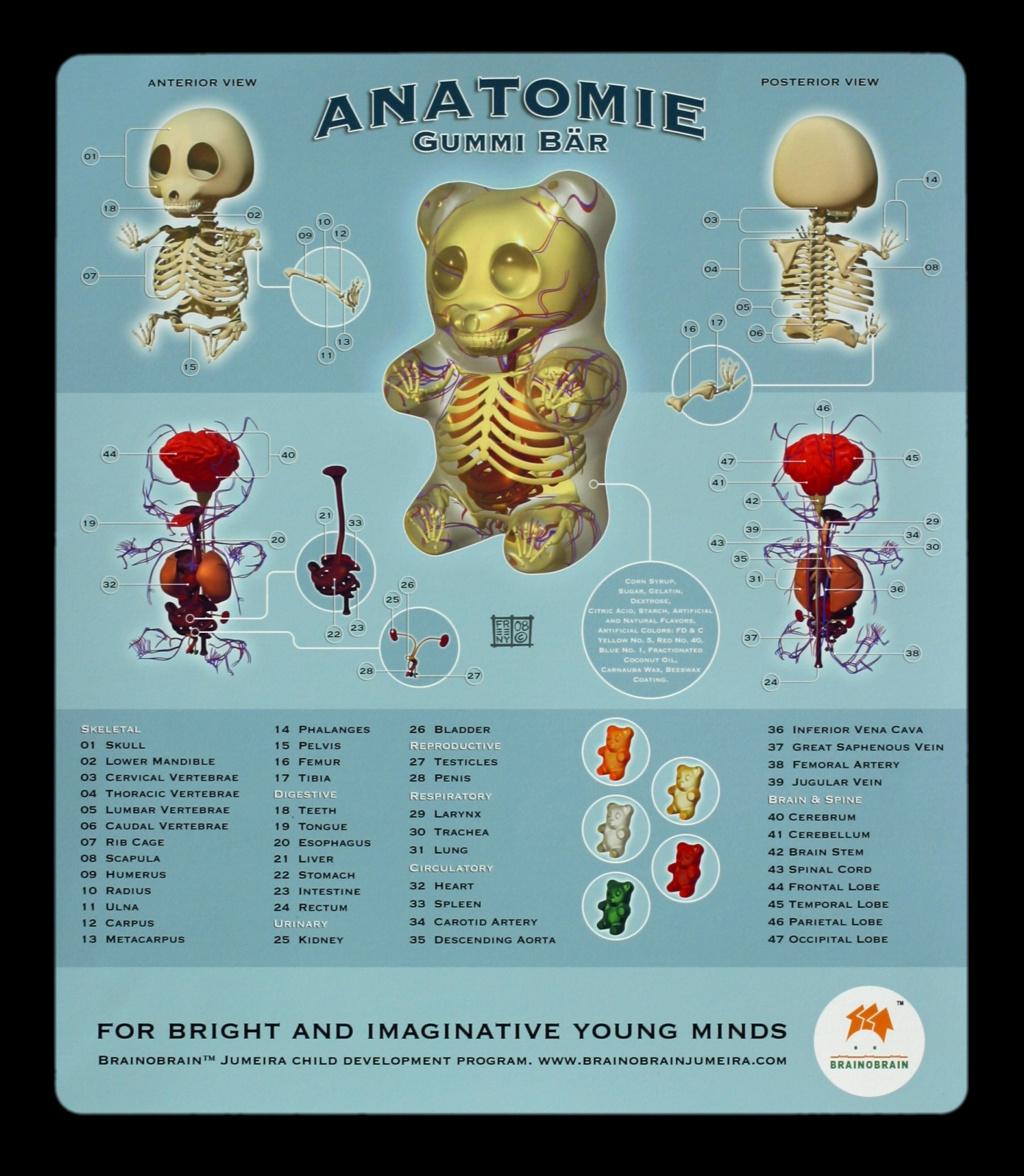 Gummi Bear Anatomy 101 | Foundry Community
