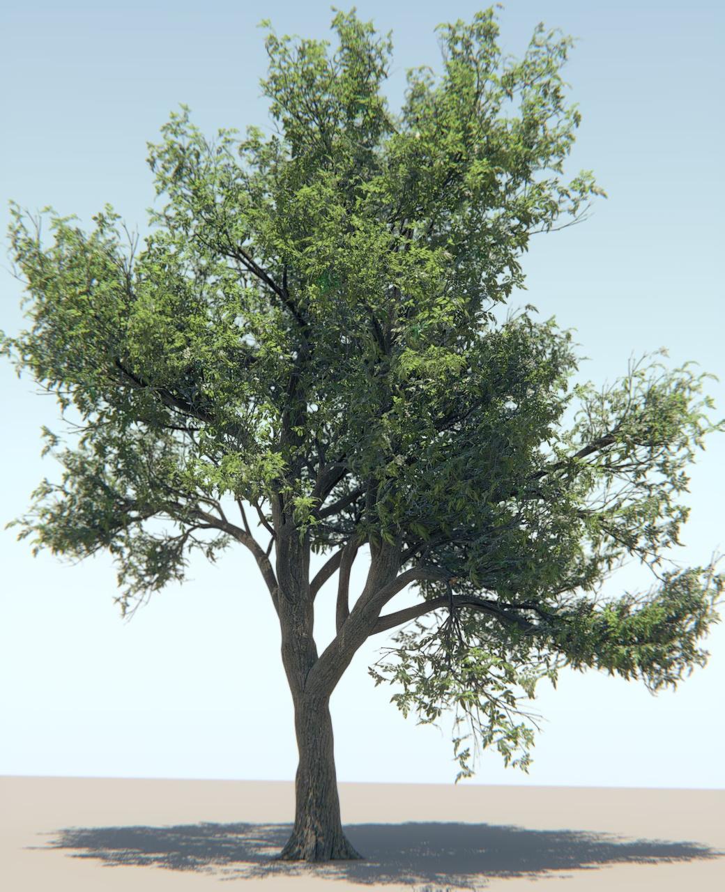🐈 Speedtree trees download | SpeedTree Desktop Tree Package
